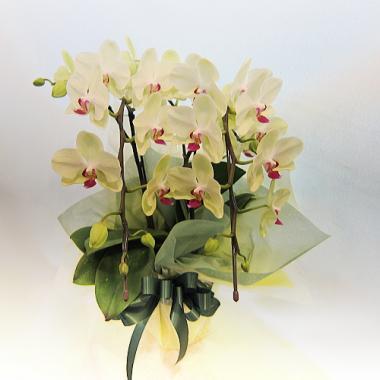 傘寿祝い 演台花にもオススメ春花をあしらったフラワーアレンジメント